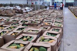 Governo do Amazonas doa 80 toneladas de alimentos para instituições filantrópicas